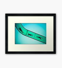 Sliding into Summer Framed Print