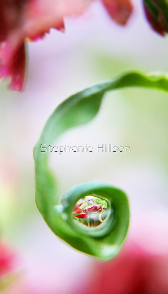Spring Pearls by Stephanie Hillson
