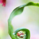 Spring Pearls by Stephanie Hillson