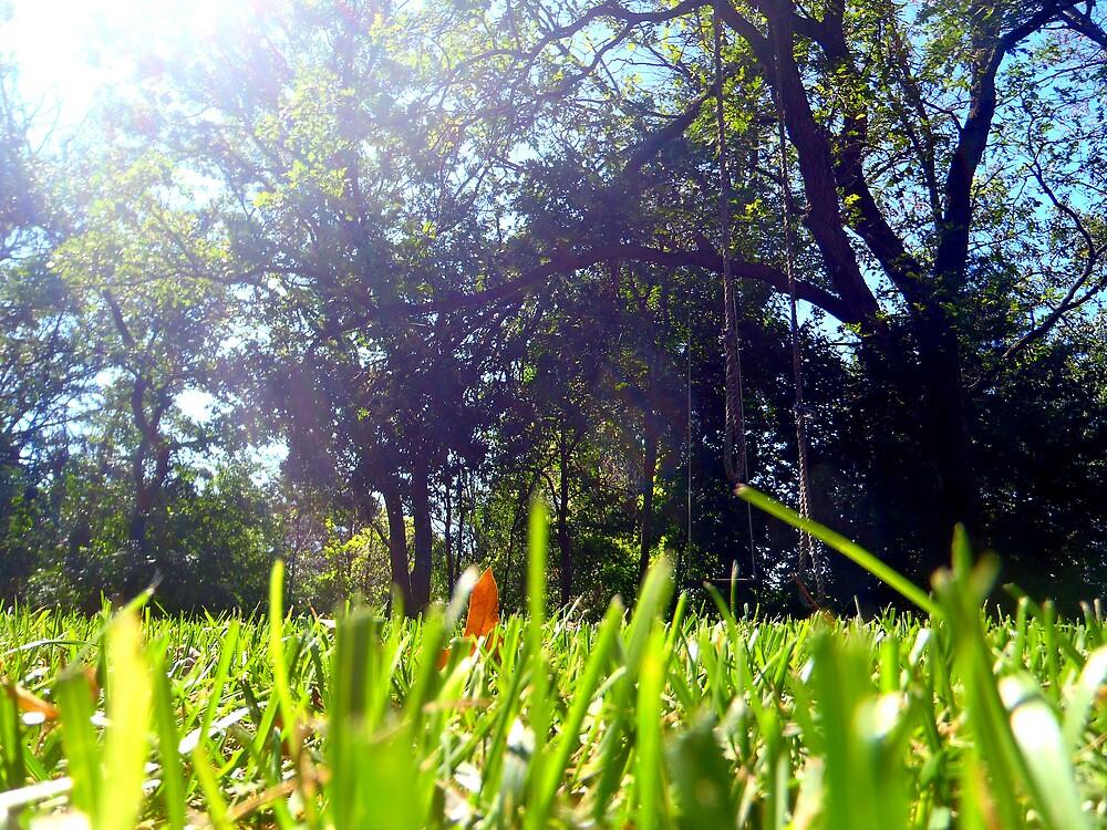 Grass by Cassie Jahn