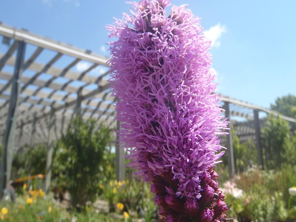 Purble Flower by Cassie Jahn