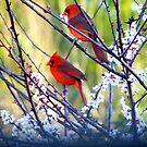 Spring Morning Duet by Judy Wanamaker