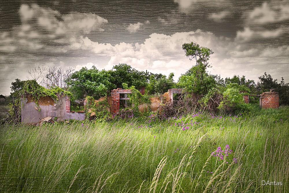 Secret Garden by Danuta Antas