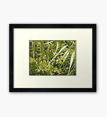 Warbler Framed Print