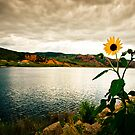 Sunflower at Sundown by Kory Trapane