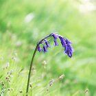 Bluebell Nodding in the Sun  by Lynn Bolt