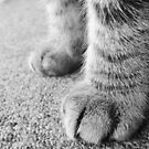 Paws by Lissie EJ