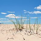 Sand Grass at Sisters Beach by Lissie EJ