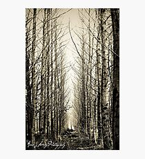 Silent Moments Photographic Print