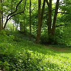 A Green Glade by lezvee