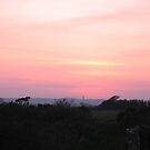 Cornish Sunset (5983) by Tony Payne