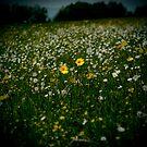 Another swiss field by laurentlesax
