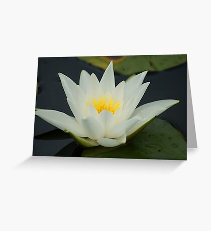 Lily of Enlightenment And Love Greeting Card