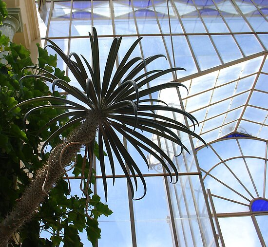 Palms and Glass by Ellanita