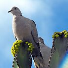 Collared dove by larry flewers