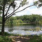 A Secret Hidden pond  by Missy Yoder