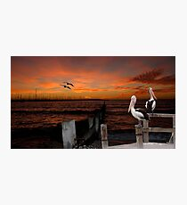 Pelican Sunset Photographic Print