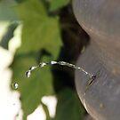 Sprung a Leak - Magpie Springs - Adelaide Hills Wine Region - Fleurieu Peninsula by MagpieSprings