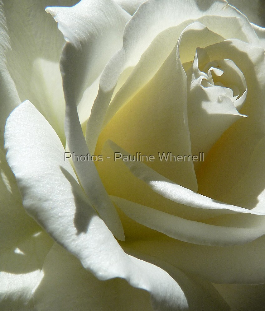 Purity by Photos - Pauline Wherrell