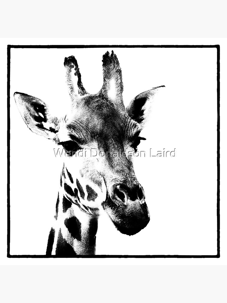 Gentle Giraffe by wdonaldson