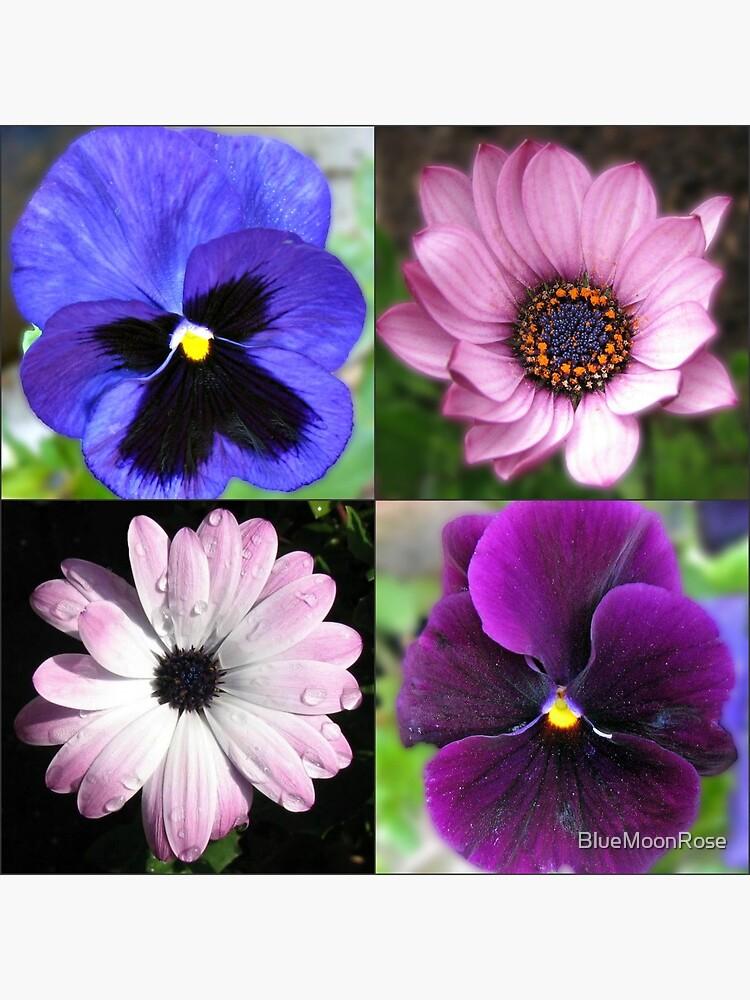 Cute Pansies and Daisies Collage von BlueMoonRose