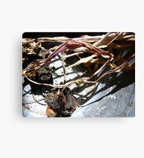 In Contrast to life Canvas Print