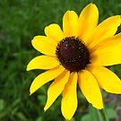 Sunny Day With Flowers by debbiedoda