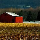 Red Barn in Winter by Lois  Bryan