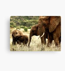 Samburu Canvas Print