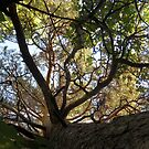 I see - Gorky Park by Valens