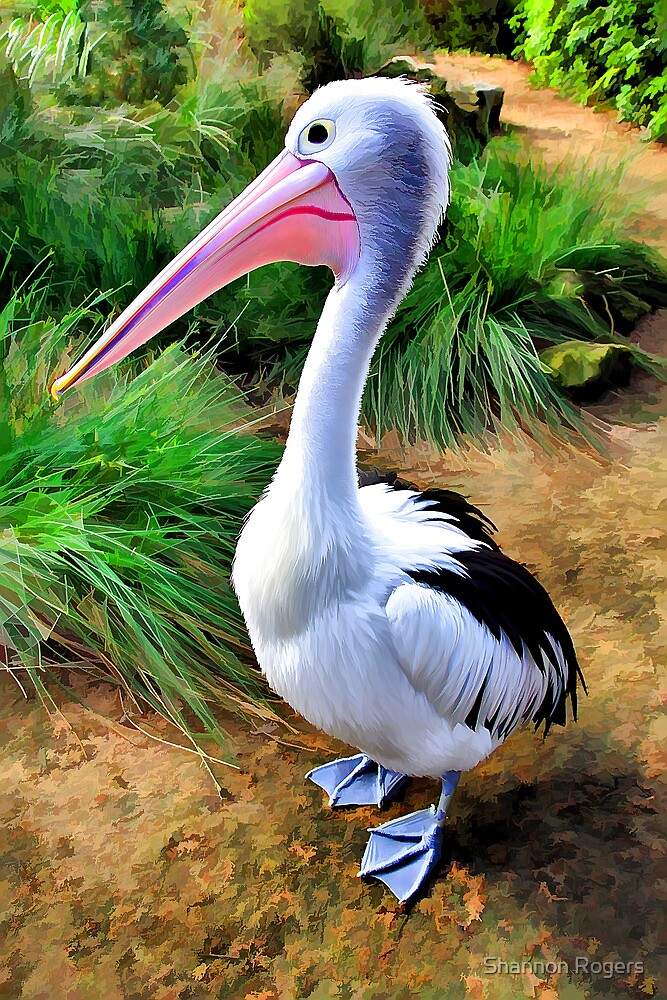 Pelican Perfection by Shannon Rogers