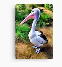 Pelican Perfection Canvas Print