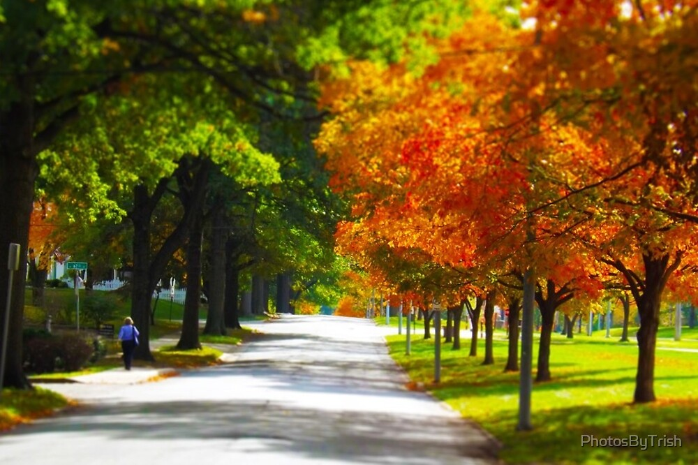 Trees and Autumn, Fall Leaves 2 Tilt Shift by PhotosByTrish