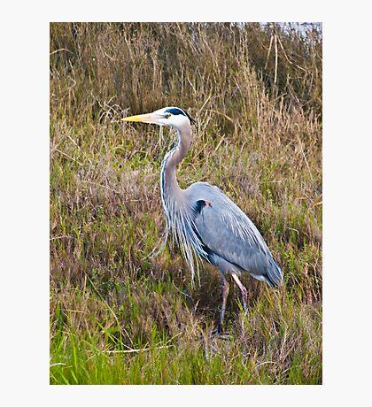 Crane, Crissy Field Photographic Print