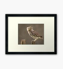 Owl on a post staring at you Framed Print