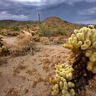 Summer in the Sonoran by Sue  Cullumber