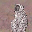 Gray Langur Monkey by lottibrown