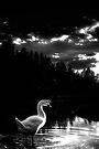 White Duck, Black Water by Bob Larson