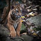 Prowling by Jack Jansen