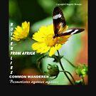 COMMON WANDERER by Magriet Meintjes