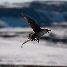 In Flight by reefer
