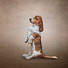 Zeichnung Basset Hound Hund von bonidog