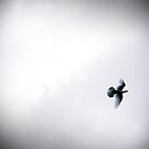 In Flight..The Bird of Peace by Berns