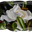Southern Blossom by FSULADY