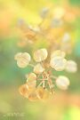 Garden fantasy by aMOONy