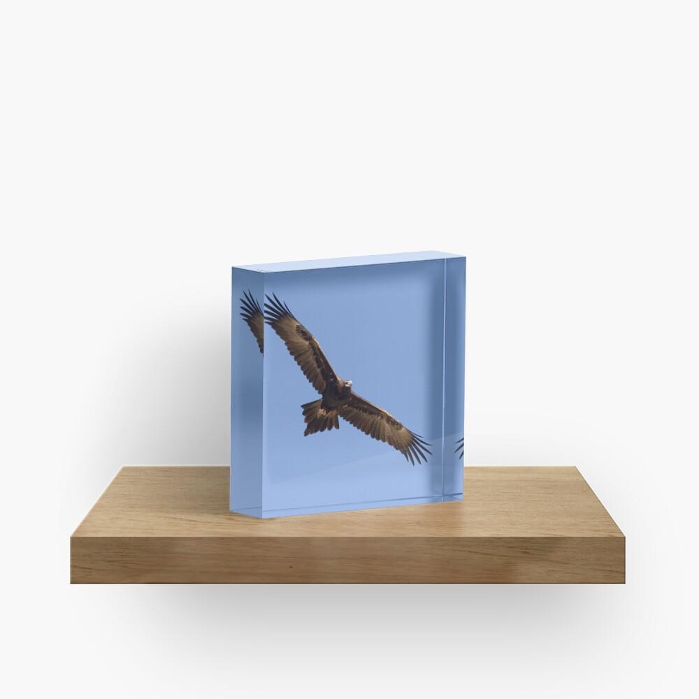 Wedgetail on patrol Acrylic Block