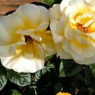 Twin Roses by Shoshonan