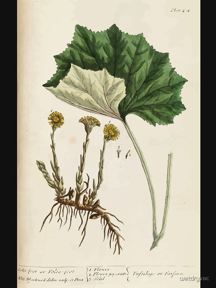 A curious herbal Elisabeth Blackwell John Norse Samuel Harding 1737 0522 Colts Foot or Poles Foot by wetdryvac