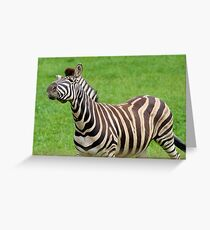 Zebra strike a pose Greeting Card