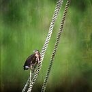 Heron on a Rope by Jonicool